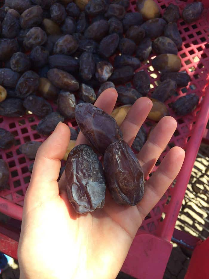 medjool dates dating 50
